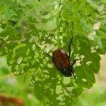 Борьба с вредителями малины народными средствами фото