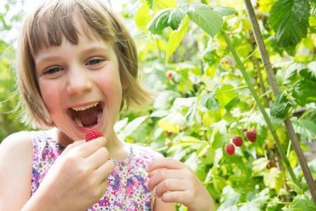 Польза малины для здоровья
