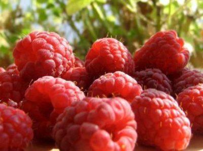 Оздоровительные свойства малины,фото