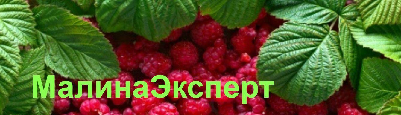 Все о ягоде малине
