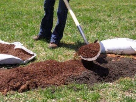 Как садить малину весной на урале