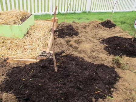 Выращивание малины сорта сказка