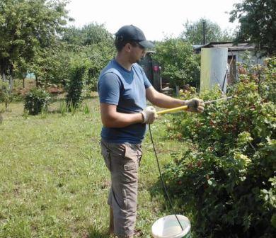 Малина Утренняя Роса: выращивание и уход