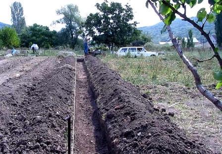 Время посадки малины весной в открытый грунт