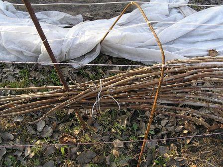 Уход за черной малиной осенью: подготовка к зиме