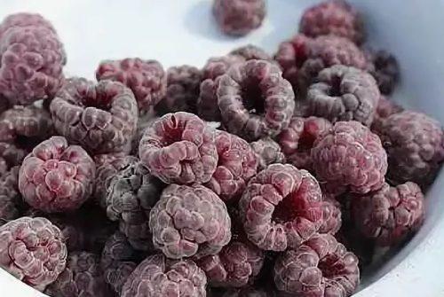 Сорт фиолетовой ежемалины Парпл Джевел
